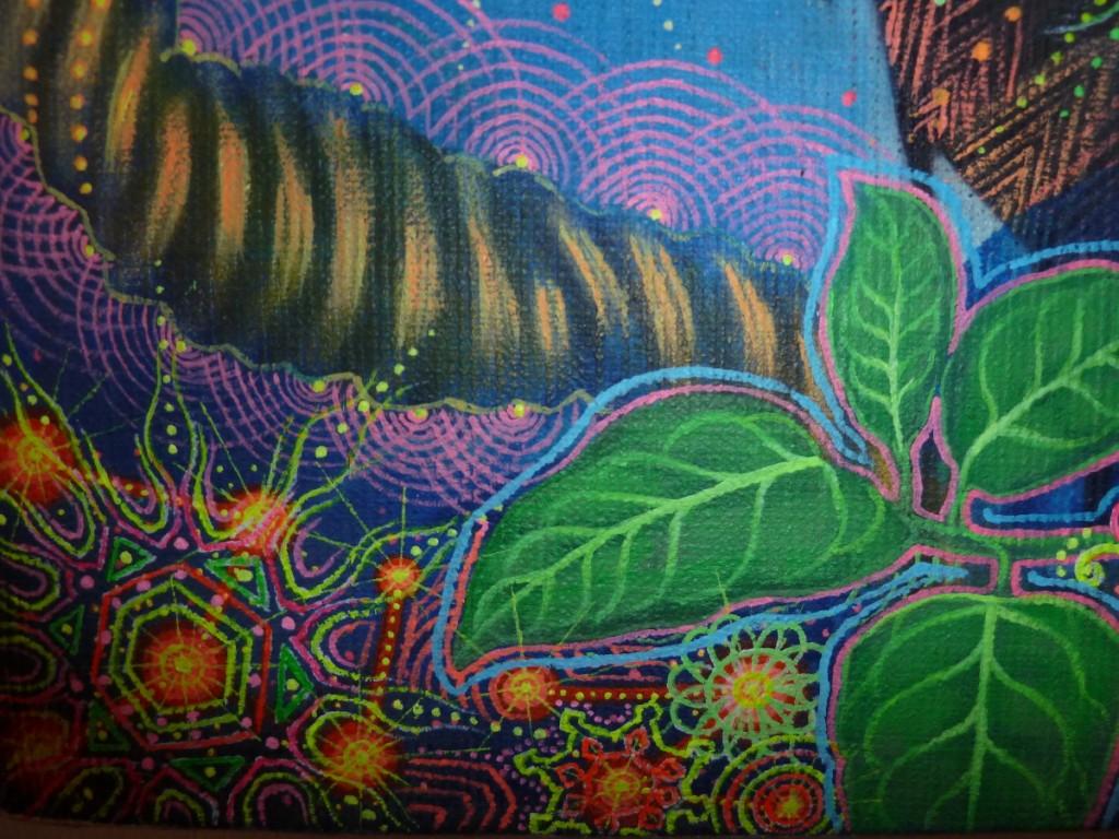Ayahuasca: liana e foglia
